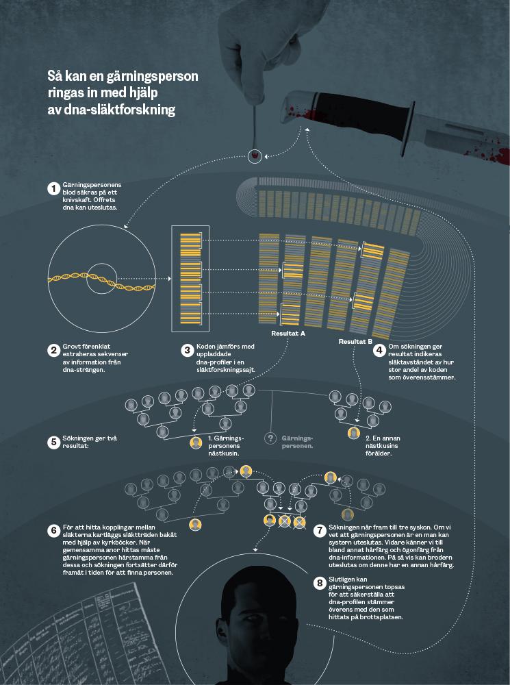 DNA infografik2